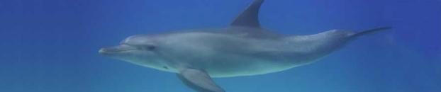 Dolphin Streamline