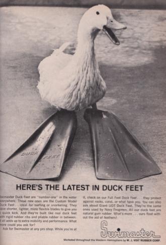 Duck in Swim Fins for Bodysurfing